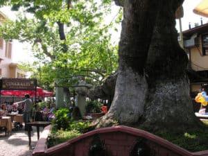 The tree terrace of Çengelköy Çınaraltı in Istanbul, Turkey.