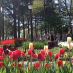 Things to Do in Spring in Istanbul